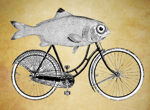 fish-riding-bicycle.png