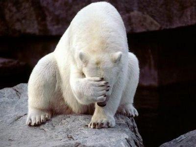 polar-bear-facepalm